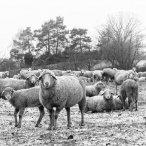 WG18-02-15-00313 Winterweide - Copyright by  Wilfried Gebhard