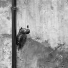 9  Venezianische Installation - Venedig 2014 © Wilfried Gebhard www.fotowege.de