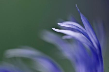 Blaue Zärtlichkeit