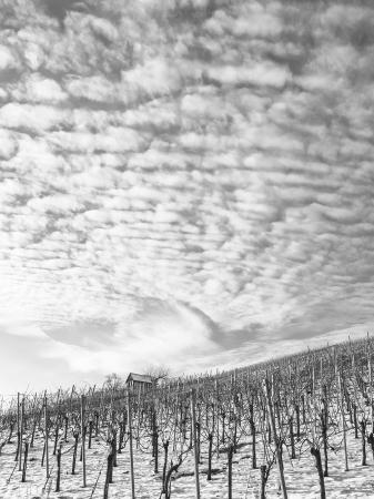 Winter im Weinberg