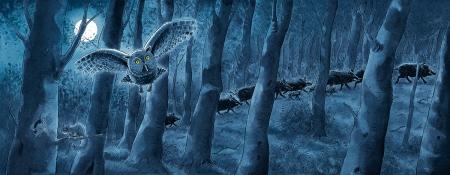 Wenn es Nacht ist, dann ist es im Wald noch lange nicht still.